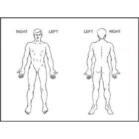 "Chart Label - Anatomical Diagram - 3"" x 4"""
